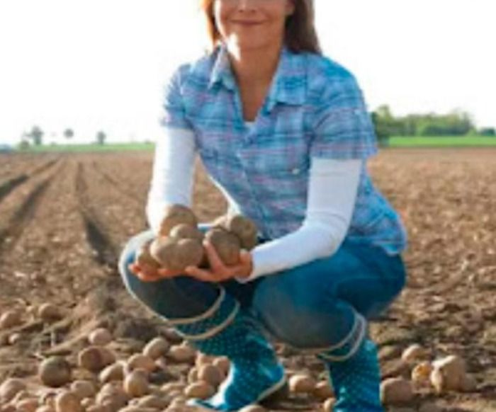 Golpe: Mulher se passa por fazendeira e causa prejuízos de 12 milhões